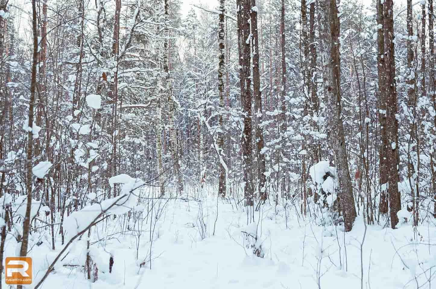 Mežs Garie kalni ziemā