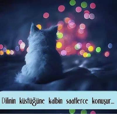 Dilinin küstüğüne kalbin saatlerce konuşur, kedi, gökkuşağı, gökyüzü, rengarenk, aşk,