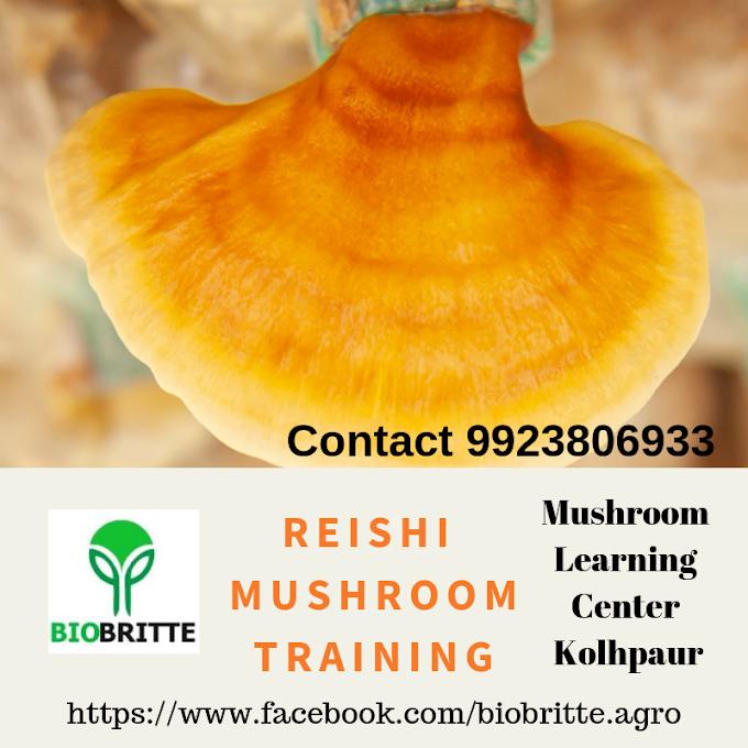 Reishi mushroom training-mushroom learning center kolhapur