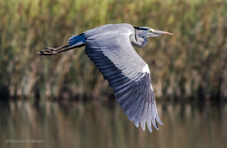 Vernon Chalmers - Birds in Flight Photography Training