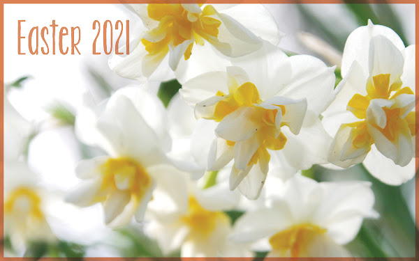 Easter Jonquil Daffodil
