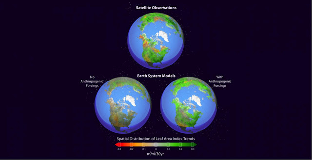 Climate study finds human fingerprint in Northern Hemisphere greening