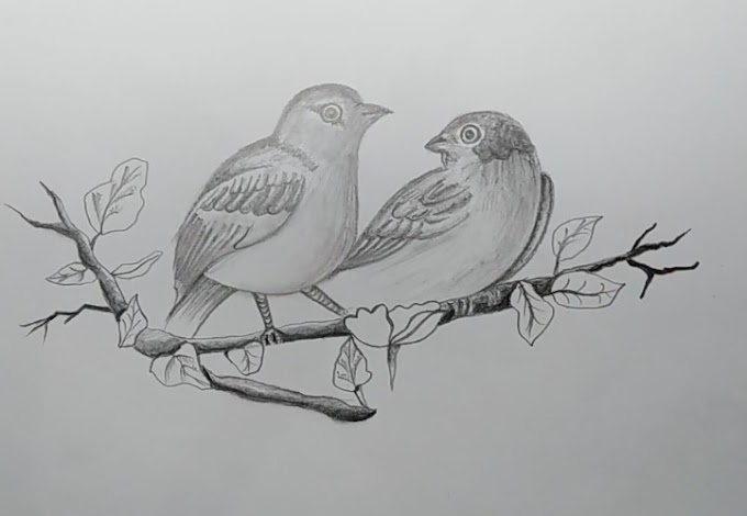 How To Draw A Realistic Bird Step By Step For Beginners