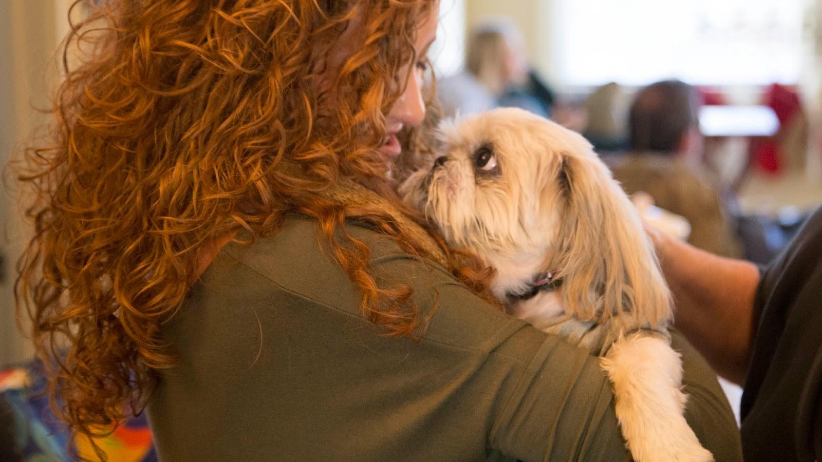 Image result for Shih Tzu dog Hug