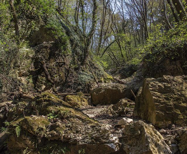 Őserdő a Keleti-Bakony peremén: Burok-völgy