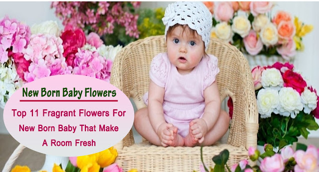 Top 11 Fragrant Flowers For New Born Baby That Make a Room Fresh