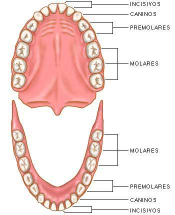 Mi Sala Amarilla: El cuidado de los dientes.Proyecto y taller de ...