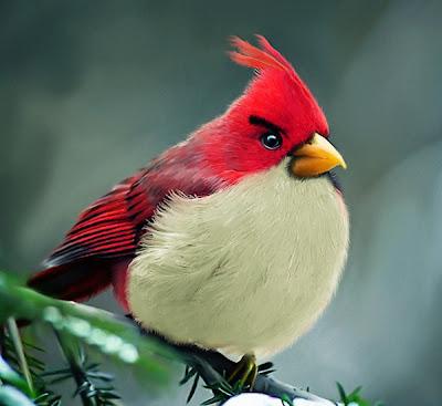 Burung Angry Bird di Dunia Nyata