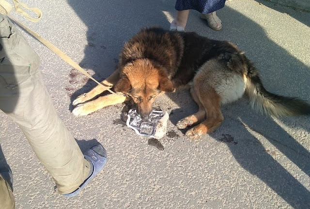 В Калужской области живодёр привязал собаку к машине и протащил по городу