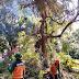 PLN Gandeng Dinas Permukiman Kota Semarang Bersihkan Ranting Pohon Yang Ganggu Jaringan Listrik