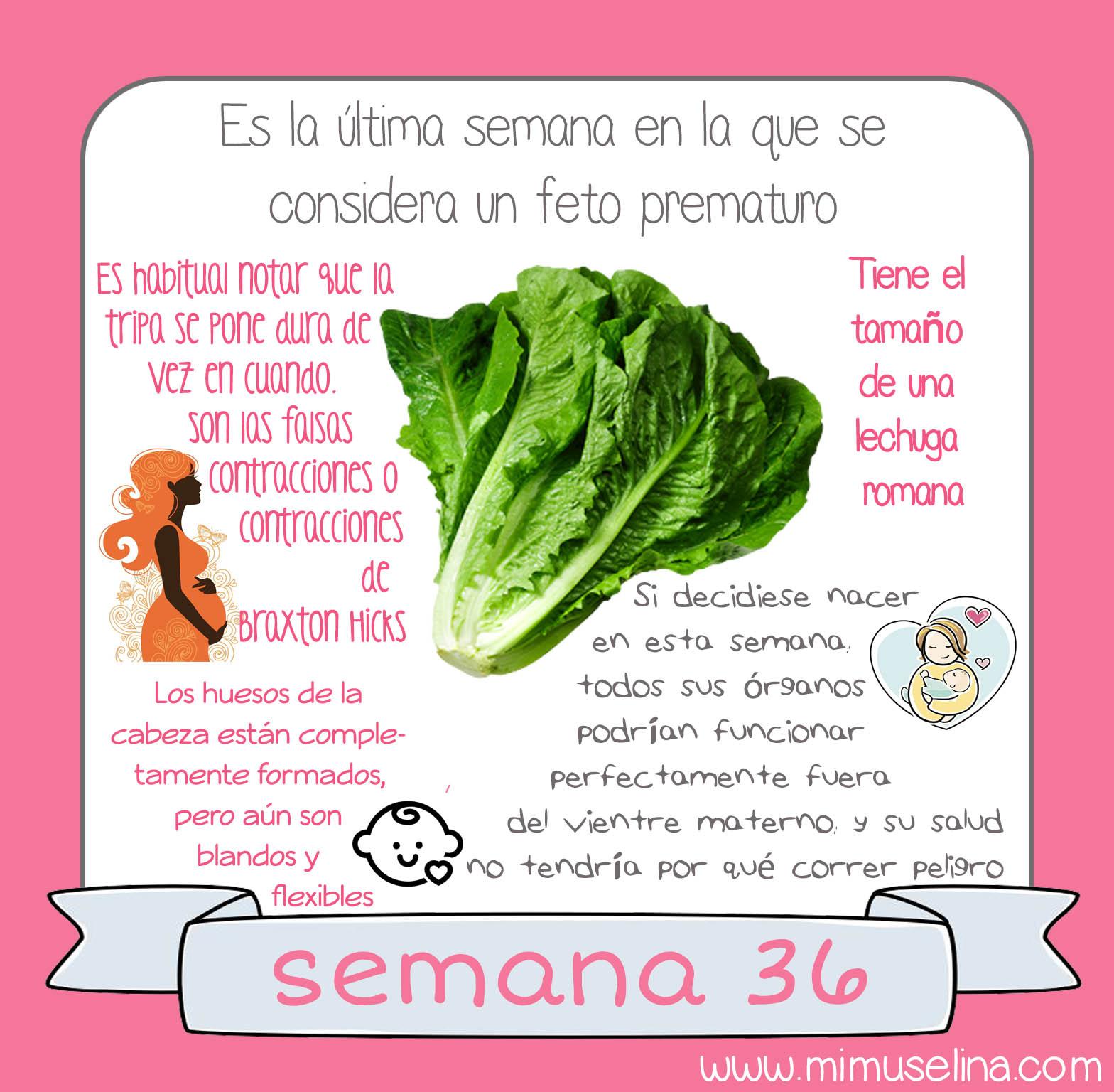 Bebeblog By Mimuselina Semana 36 Embarazo Tamaño Y Evolución Del Bebé Mimuselina Embarazo 36 Semanas De Embarazo Etapas Embarazo