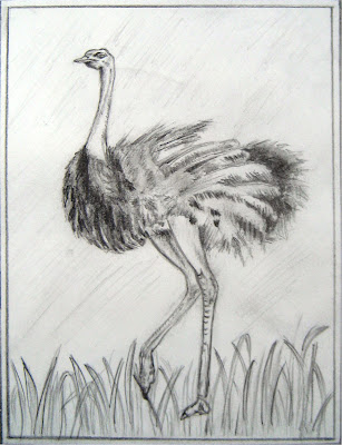A sketch of an Ostrich