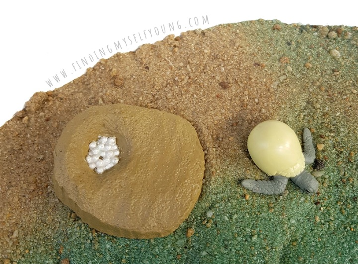 turtle eggs and babies in sand