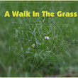 A walk in the Grass