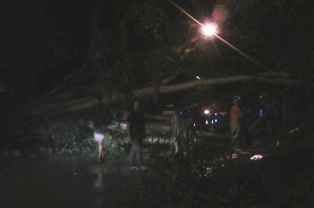 Pohon Tumbang, Jalan Tandipau Palopo Macet