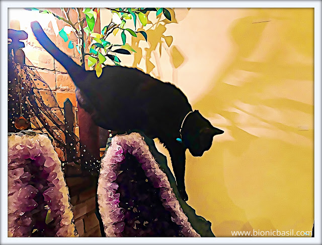 Parsley Caturday Art @BionicBasil® Pet Peeves #23 Oil Painting