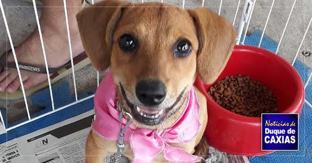 Resultado de imagem para Caxias Shopping promove Campanha de Adoção de Animais dia 16 de novembro