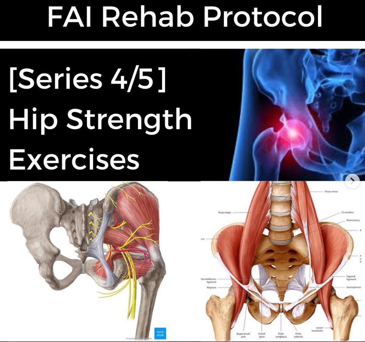 FAI Rehab Protocol Part 4 - Hip Strength Exercises - themanualtherapist.com