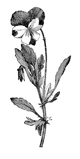 flower botanical wildflower image download
