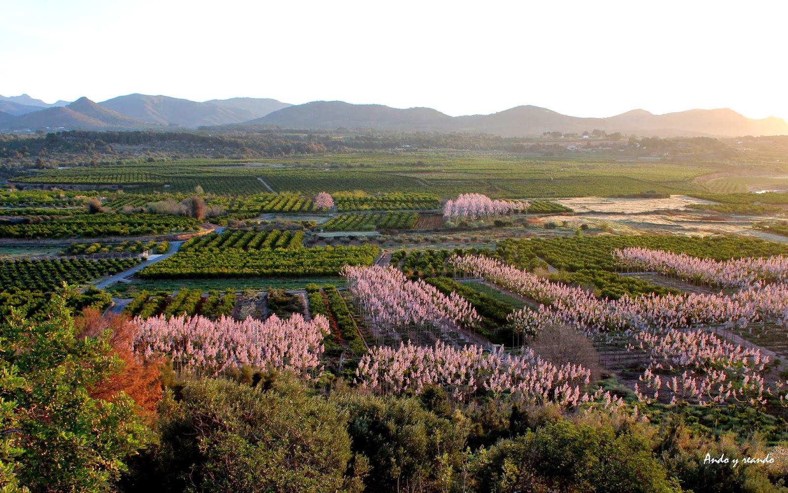 Vistas a los cerezos en flor en la Sierra Calderona-Valencia