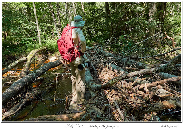 Tully Trail: ... blocking the passage...