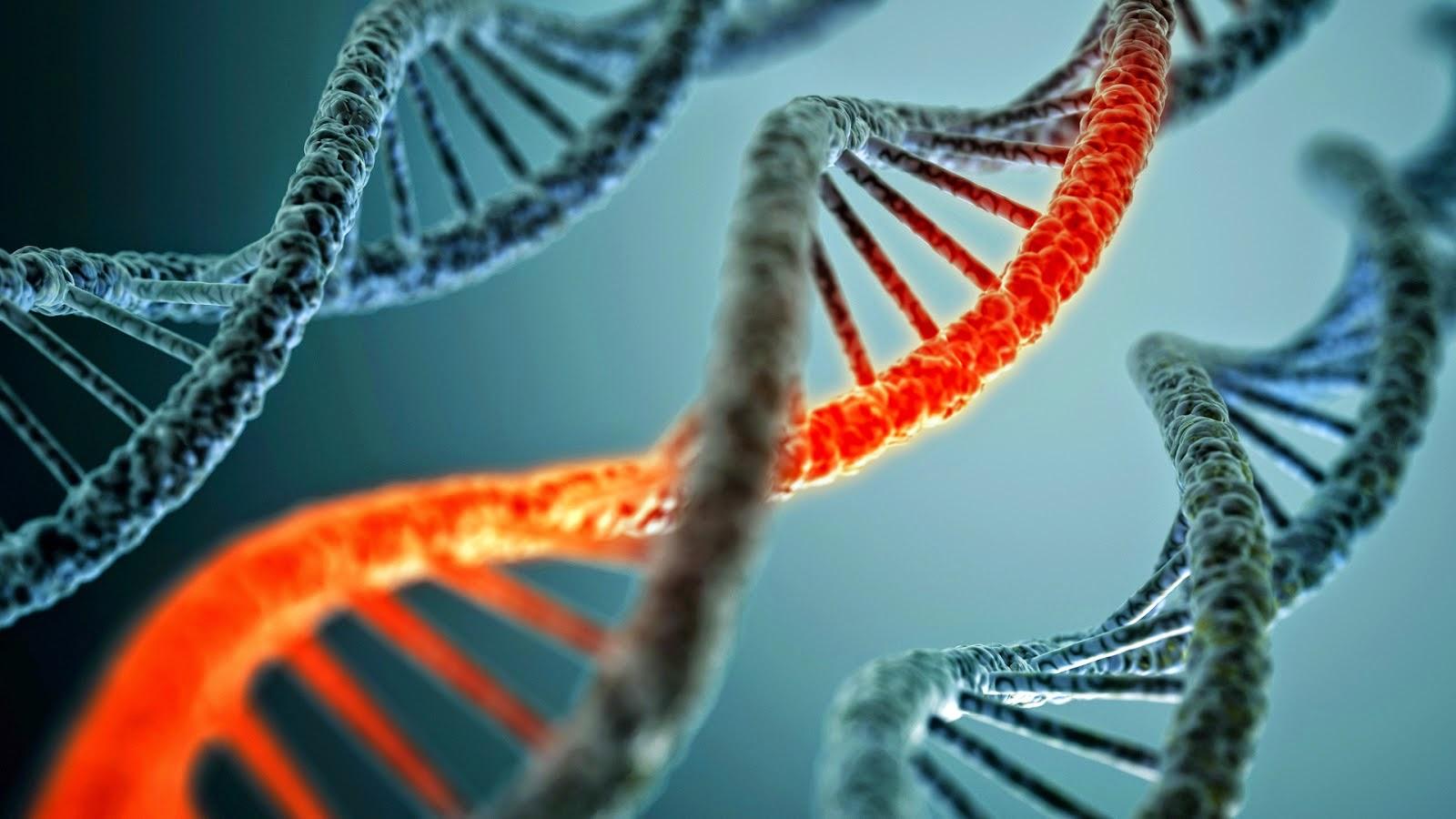 Fakta Ilmiah Penelitian Perbedaan Gender Jenis Kelamin Secara Biologis