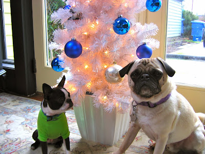 Liam the pug and Sinead the Boston terrier and their tree
