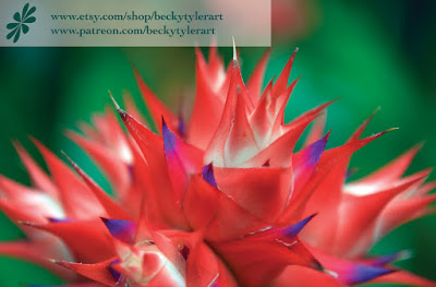 Bromeliad, Macro Photography