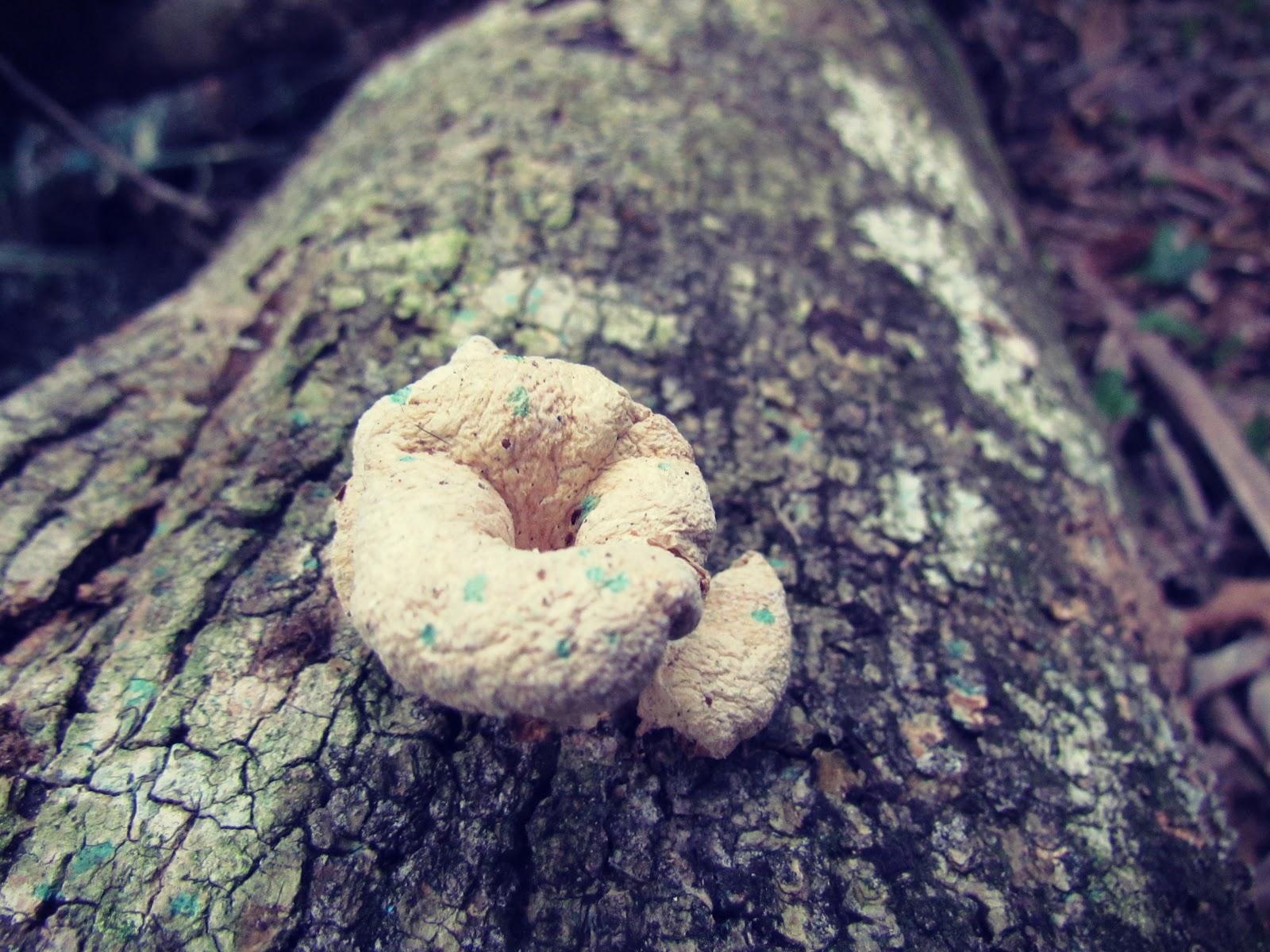 Tree Log and Mushrooms