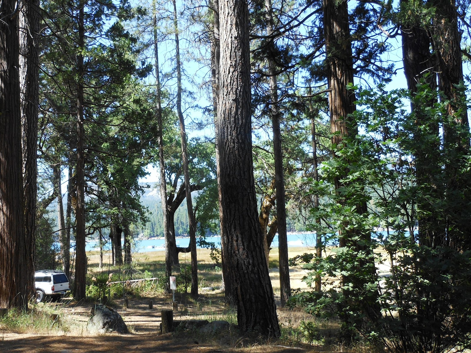 1000 Hikes In 1000 Days Day 575 Forks Campground