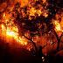 Hay 73 incendios forestales en 16 entidades: Protección Civil