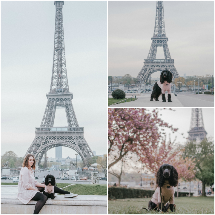 Paris with Dogs