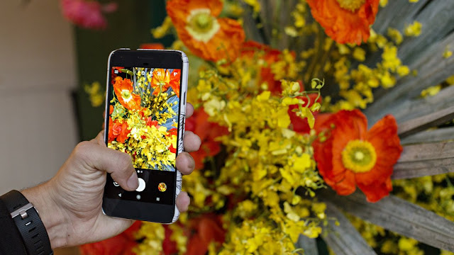 Here Are Google's Best Tips for Creative Flower Photography from Pixel Phones