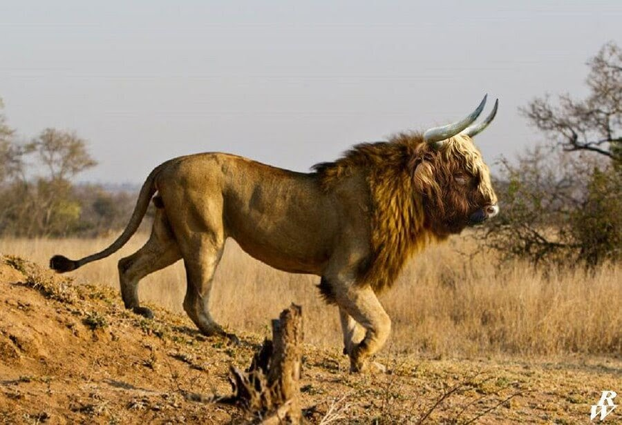 10-Lion-and-Scottish-Bull-Rob-Westdorp-www-designstack-co