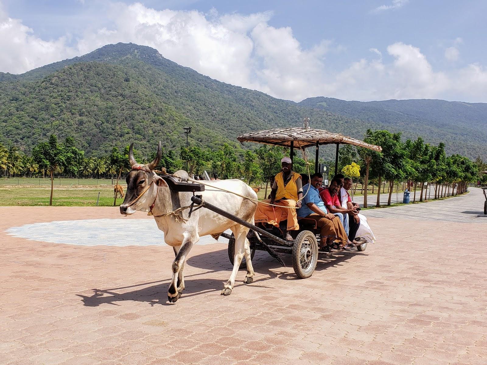 Adiyogi Bullock Cart Ride