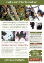 Bats and Electrocution.pdf