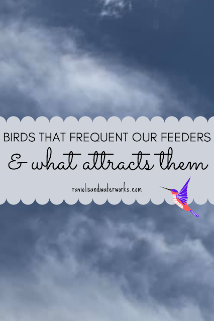 how to attract different birds to backyard; backyard birding proven tips