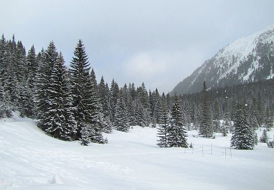 Górne partie Doliny Rybiego Potoku.