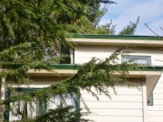 Lip of green metal roof highlighted by a lighter green accent line