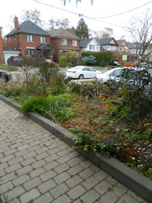 Bedford Park Toronto Fall Front Yard Cleanup Before by Paul Jung Gardening Services Inc.--a Toronto Gardening Company