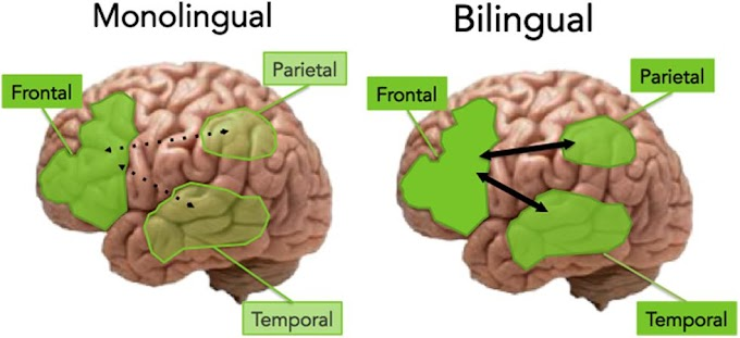 The benefits of a bilingual brain - Bilingual Brain