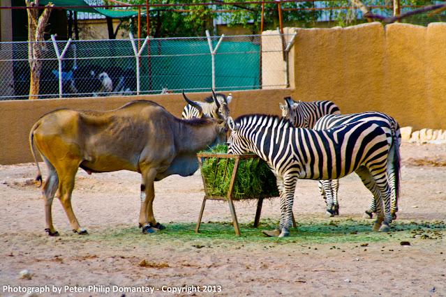 حديقة الحيوانات الرياض