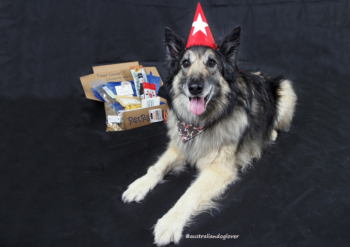 We Never Used To Make A Big Deal Of Our Dogs Birthdays As They All Tend Be Quite Spoilt On Daily Basis However Thought That The 10th Birthday