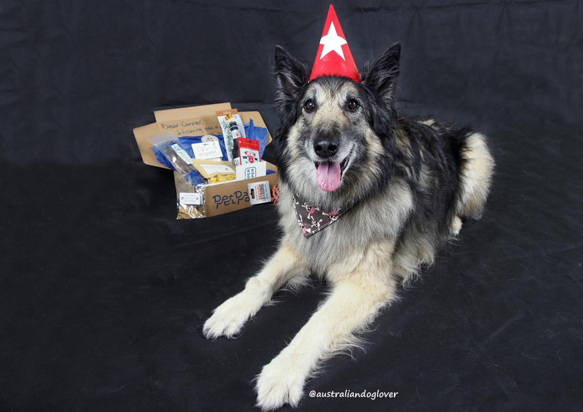 PetPacks Pet Birthday Gift Box Review