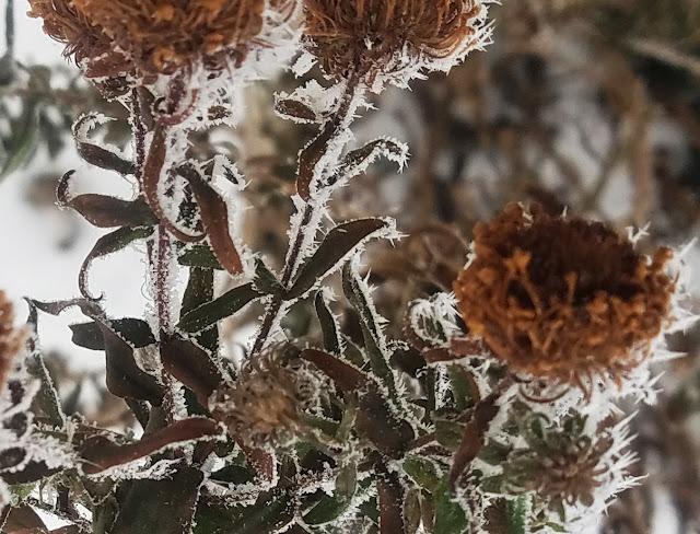 увядшие цветы в хрустальных снежинках - льдинках...