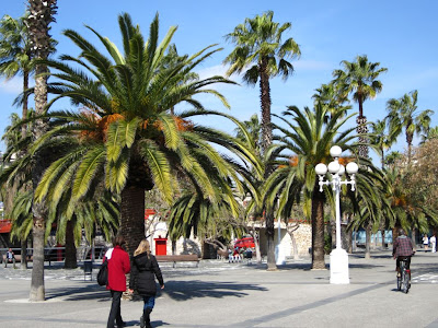 Palms along the promenade of the Barcelona Port Vell