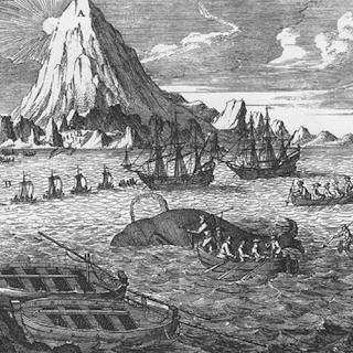 Chasse à la baleine. Gravure du XVIIIème siècle. Source : inconnue