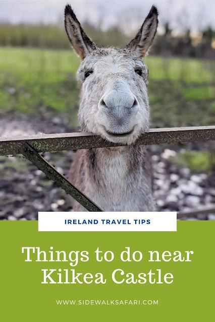 Things to do near Kilkea Castle in County Kildare Ireland