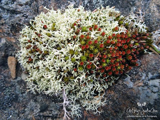 Moss and lichen photos