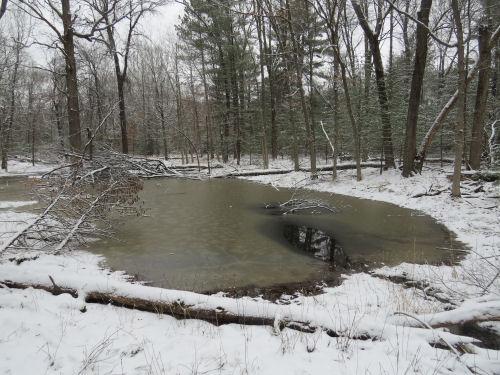 muddy pond